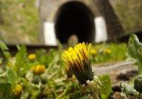 Spring 2006, Septemvri-Dobrinishte narrow gauge